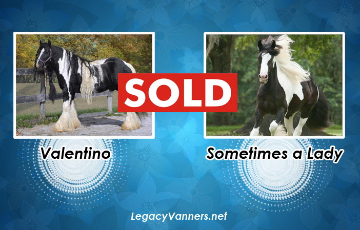 valentino-x-sometimes-a-lady-sold