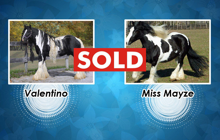 valetino-mayze-sold